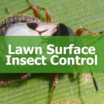 Insecticide Insect Control