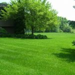 Lawn Fertilization Webster Groves MO 63119