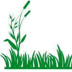 Weed Control Maryland Heights Mo 63146